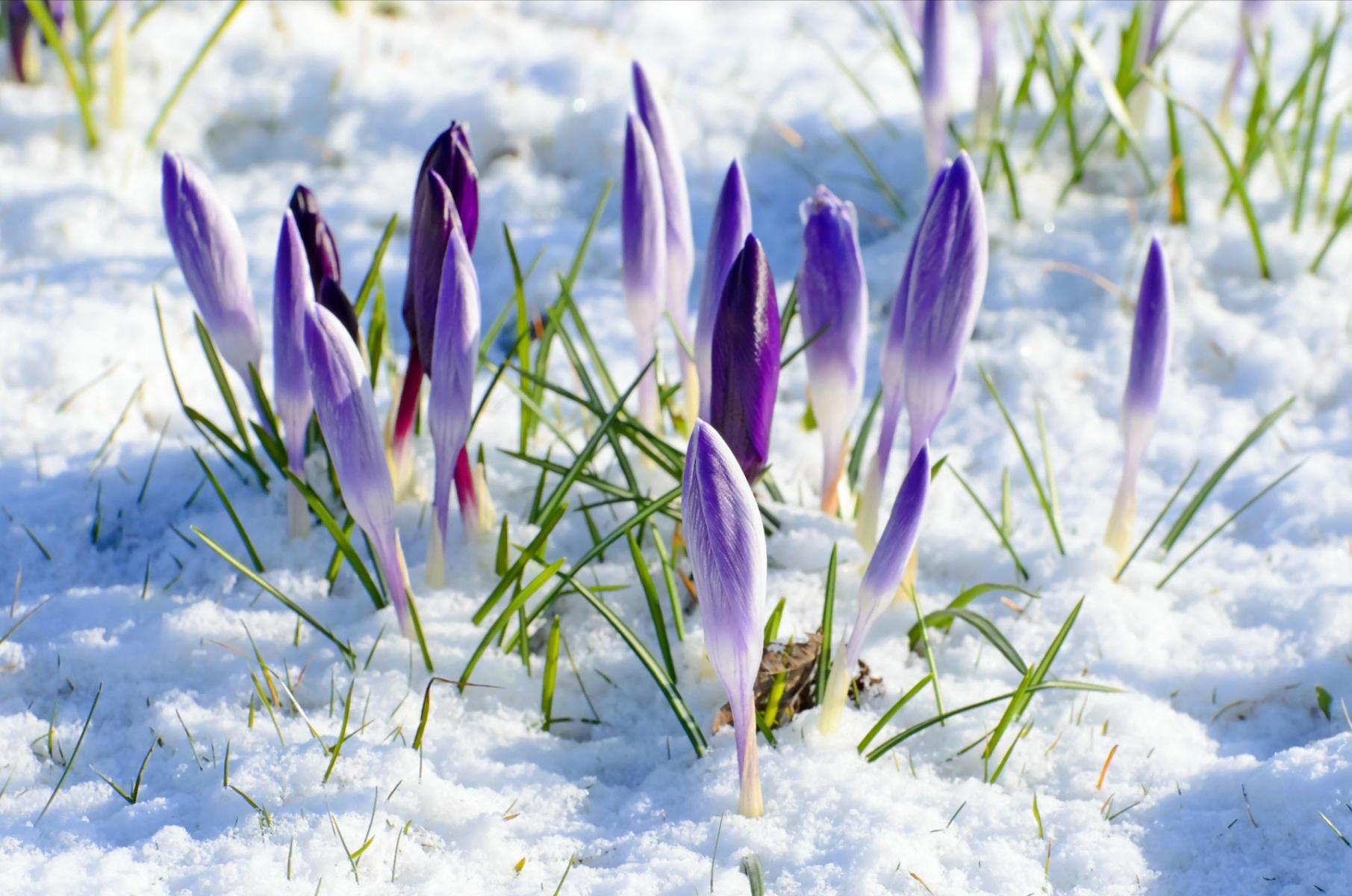spring-good